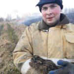 Спасти зайчонка